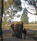 elephantwalk.0617.jpg