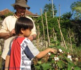 Wija showing Peter the cotton plants