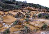 Killcare Beach Sandcastles