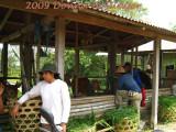 Asparagus Farm Workers