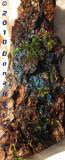1200.bark.fungi.ld.0114.jpg