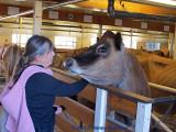 Anni Admiring the Dairy Cow