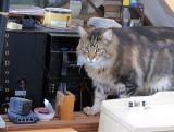 Augie, Computer Fixer