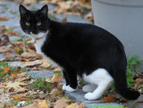 Cathi's Kitty Pedey