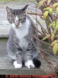 Bev's Kitty Digger