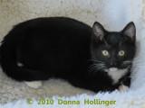 Rosemarie little kitty
