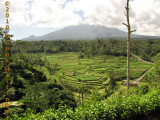 Batur Lurking Behind Rice Terraces