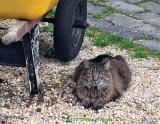 Mona and the Yellow Wheelbarrow