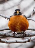 Stereovision Robin