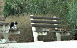 Kitty Park