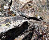Butterfly in Cyprus