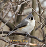 Titmouse waiting