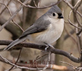 Titmouse turning
