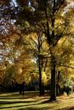 Fall in Missouri