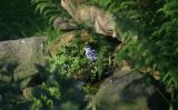 Black-and-white Warbler in yard pond stream