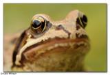 Amphibian & Reptiles