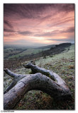 Chanctonbury Ring dawn