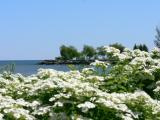 Spring at the marina....