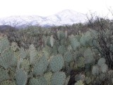 Arizona in Winter
