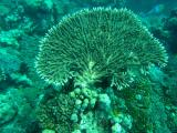 corail aux sables blancs.jpg