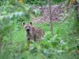 hyene 1.jpg
