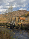 Horse in Chimayo
