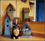 more cats & birdhouses