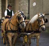 Salzburg Horses