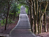 Davis Park Walkway