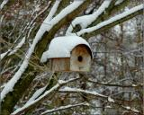 birdhouse and the first snow