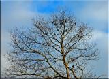 birds in the winter