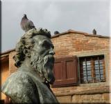 Pigeons everywhere...