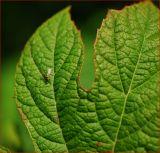 leafy green plant