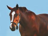 Horse-Portrait2.jpg
