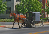 Horse and buggy51902.jpg