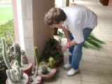 Kohl's cactus garden