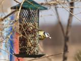 Fåglar - Birds