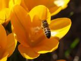 Steklar - Wasps