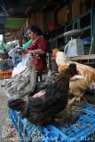 08_aug_2009_tingo_maria_chickens