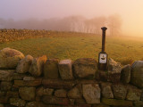 Steel Rigg wood in morning mist.