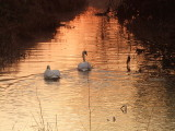 And so,the pair sloped off into the sunrise.......