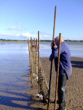 George,70 years old,and  his  mate, resetting  the  9  foot  poles  which  support  the  poke  nets.