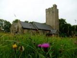 Wild  flowers  adorn  the  churchyard.