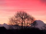 Just  before  sunrise.
