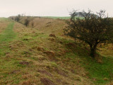 Wansdyke   re-appears  at  the  top  of  the  hill