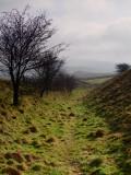 Wansdyke  looking  East  towards  Pewsey.