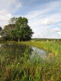 Pond  near  Hempstead  Farm.