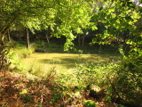 Park  Wood  pond.
