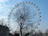 Tree in a Wheel