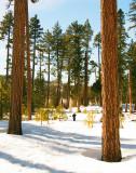 Lassen Landscape